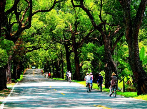 台湾十大观光小镇之一单车环游集集最惬意(图)