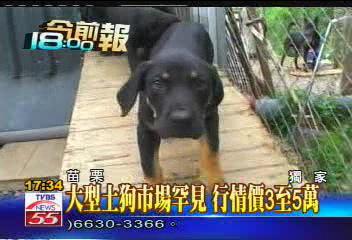 比特犬和土狗哪个厉害? 比特犬多少钱一只