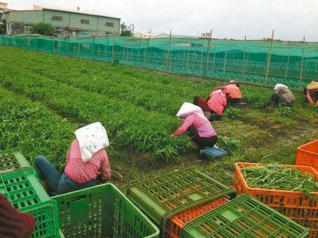 台风过境台湾菜价飙涨空心菜1公斤50元(图)