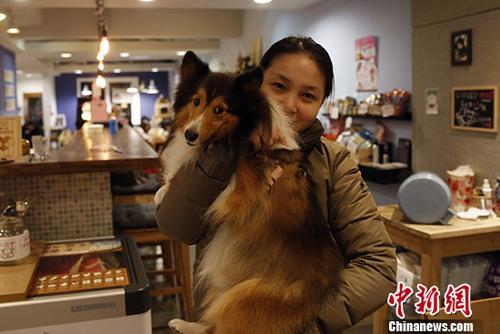 """台湾写真:""""真是好狗命""""――感受宝岛动物友善环境"""