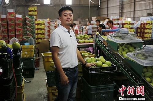 """""""农业需要进步""""台湾屏东果农盼年轻世代接班"""
