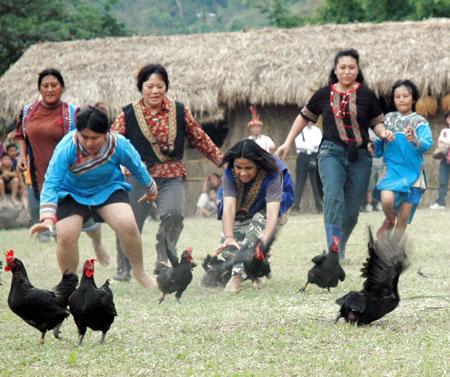 男人捉猪女人逮鸡