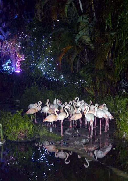 图:夜游台北市木栅动物园 气氛柔美浪漫