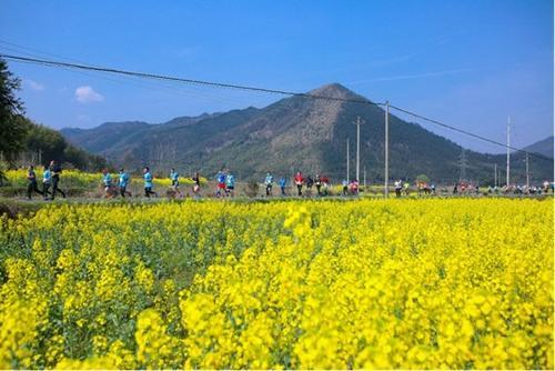 查济油菜花马拉松开赛近万名参赛者畅跑花海云崖