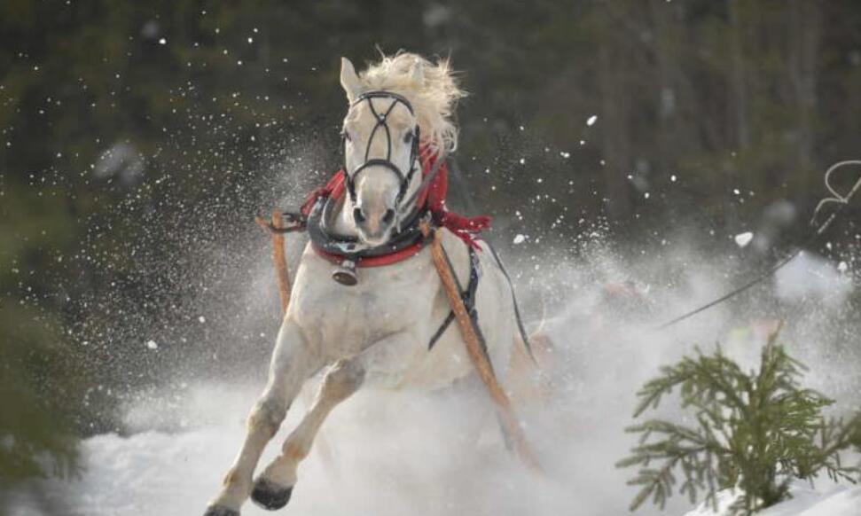 波兰民众参加一年一度赛马活动 马拉雪橇趣味十足