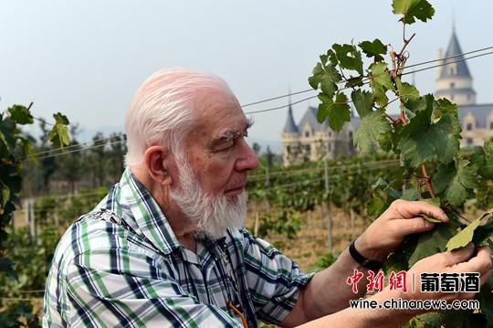 张裕先锋葡萄酒培训学院来了葡萄酒大师(组图)