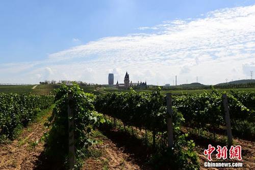 """外媒:张裕正在打造""""葡萄酒的迪士尼世界"""""""