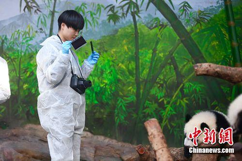 李宇春给熊猫拍照 长颈鹿羊水破裂惹倪妮心疼(图)