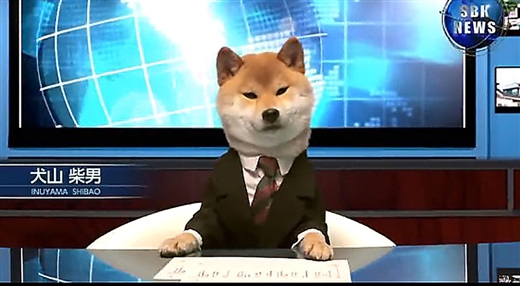日本电视台让柴犬当主播内衣前一本正经卖萌美女镜头扒自的图片