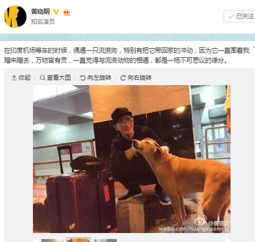 黄晓明机场遇流浪狗 网友:快把小黄带回家(图)