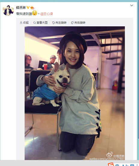 [明星爆料]明星爱萌宠:杨丞琳搂小狗 Angelababy抱皱眉猫咪
