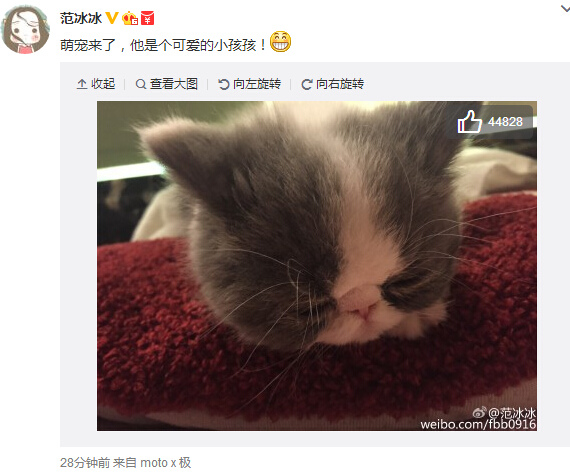 范冰冰晒宠物猫萌照网友:李晨失宠了(图)