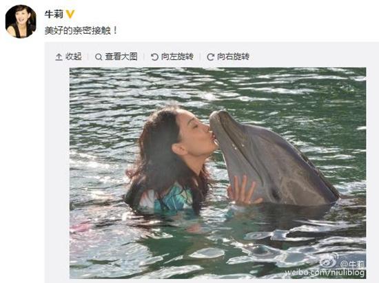 牛莉水中亲吻海豚嘴部网友:画面好有爱(图)