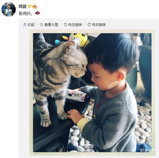 """姚晨爱子与猫咪""""哥俩好""""小土豆与爱猫头顶头(图)"""
