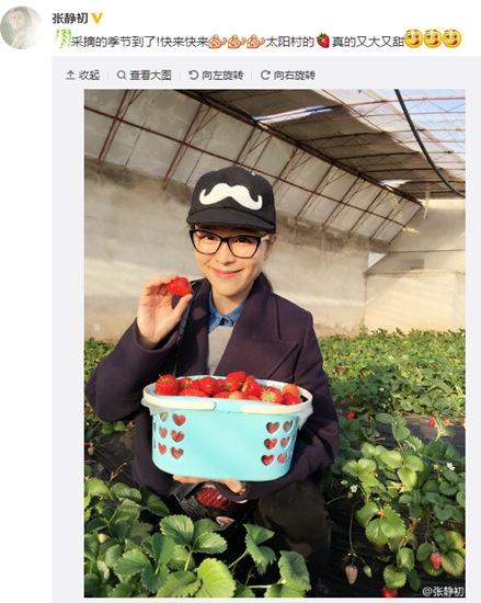 [热点新闻]张静初采摘草莓收获满满 网友:我也想吃(图)