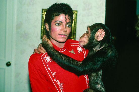 [热点新闻]传迈克尔·杰克逊生平将拍成动画片 以黑猩猩口吻描述