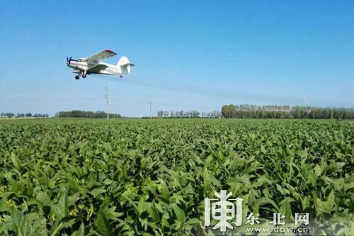 大豆产业首席科学家:黑河大豆品质优良多项指标高于全国水平