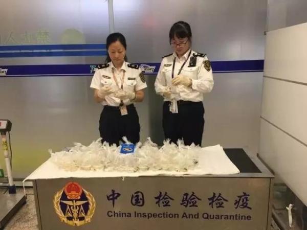 上海机场截获一批携带病毒水产品 感染致死率100%