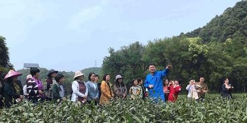 """浙江女科技工作者变身""""茶农"""" 跨界碰撞生思维火花"""