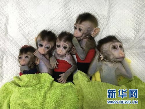 世界首批体细胞克隆疾病模型猴在中国诞生
